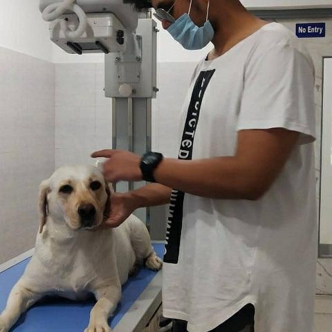 DiagnoVet Animal Pathology Meerut